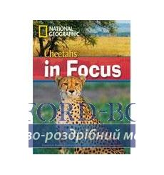 Книга B2 Cheetahs in Focus! with Multi-ROM Waring, R 9781424022199 купить Киев Украина